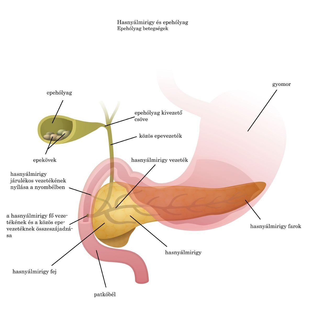 Az aceton szaga a szájból, milyen betegség. Acetonszagú lehelet - Tudástár