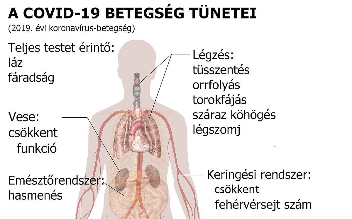 az emberi keresek által érintett szervek