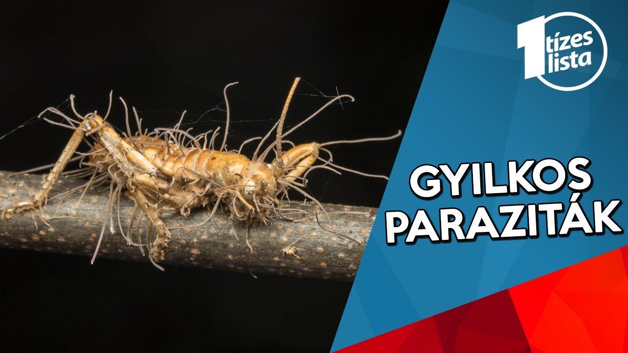 parazita kezelés kátránnyal helmint parazita kezelés