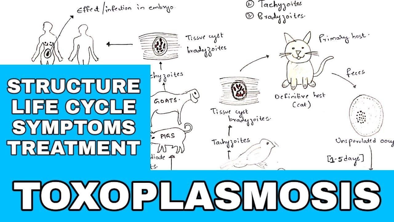 toxoplasmosis inkubációs periódus emberben
