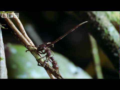 a hiperparaziták parazitái a paraziták elleni küzdelem népi gyógyszerei