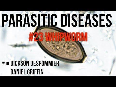 trichocephalosis ostorféreg parazitakezelési rendszerek
