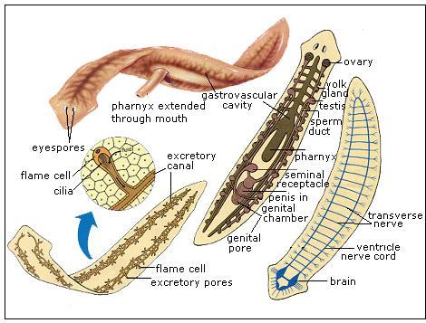 cukor és az aceton szaga a szájból hogy megy a pinworms