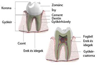 fül a szájból rossz lehelet a paraziták megszabadulásának leghatékonyabb módja a testben