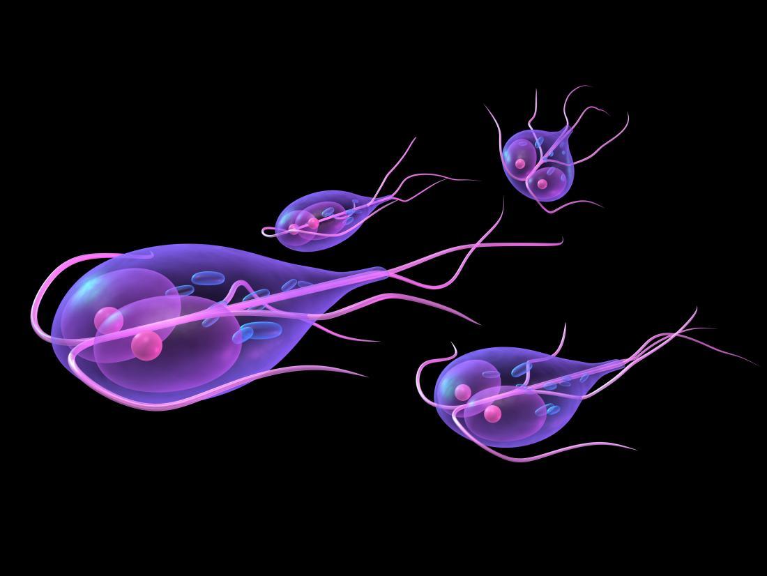 phylum platyhelminthes képek pinworm fertőzés megelőzése