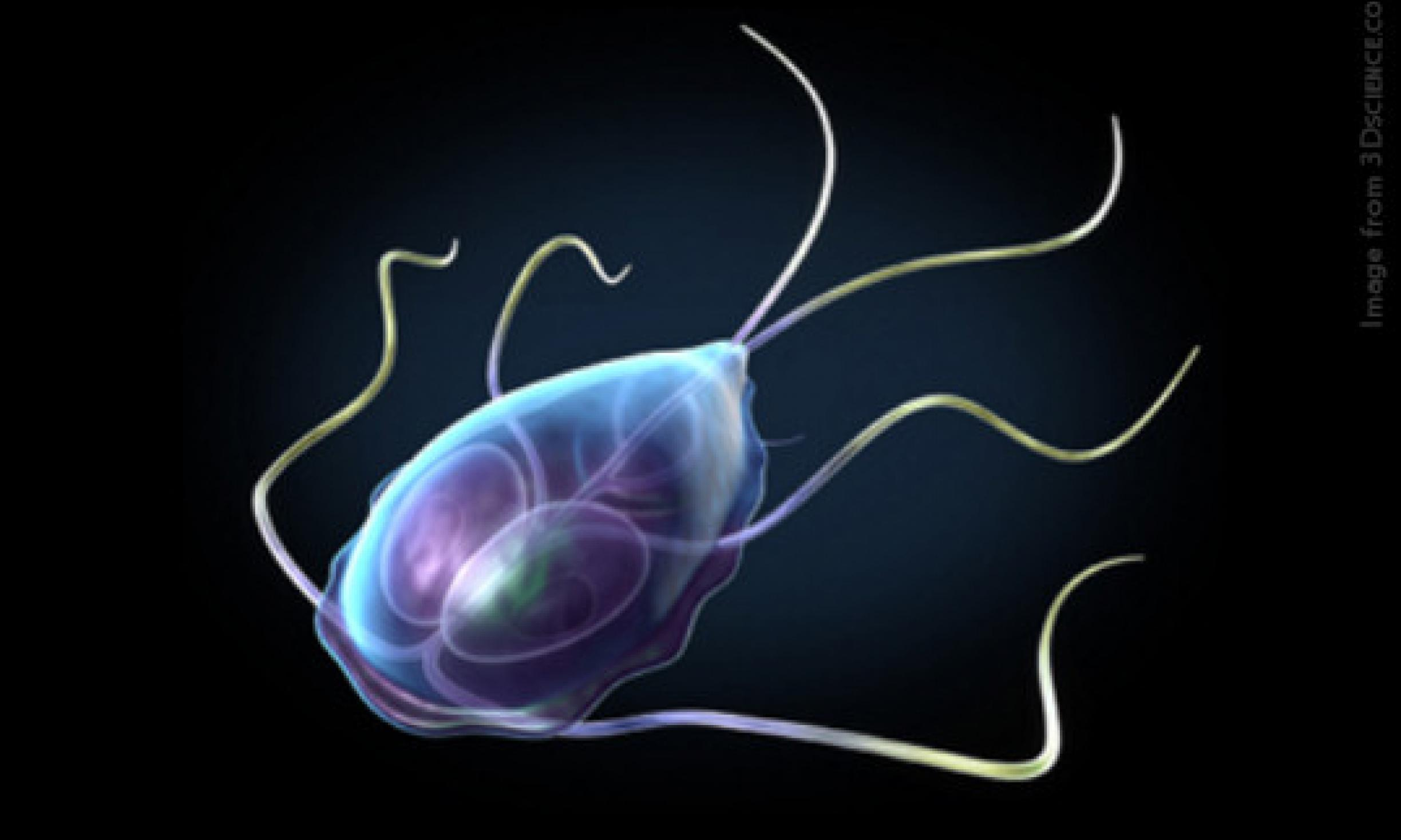 giardia diarrhea treatment