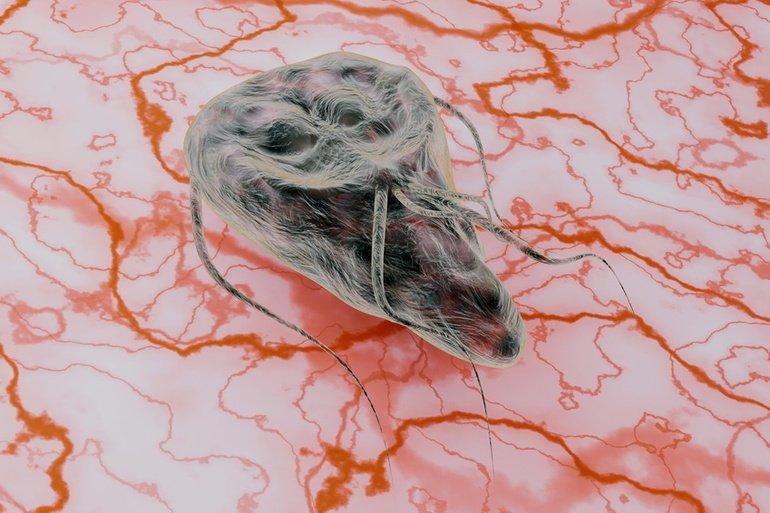 giardien mensch behandlung milyen helmint okozza a rövid távú tüdőgyulladást