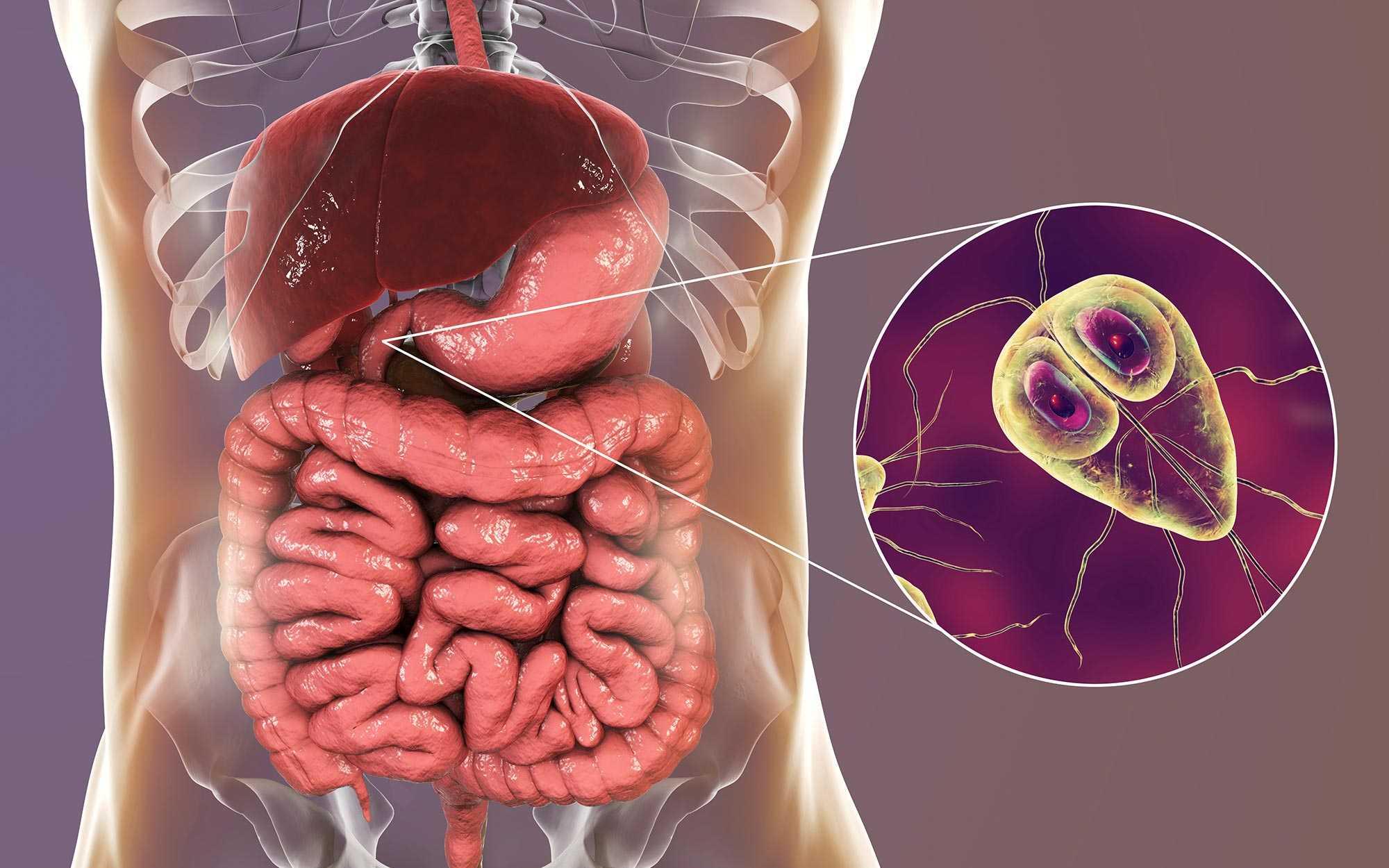 giardien mensch behandlung diphyllobothriasis betegség