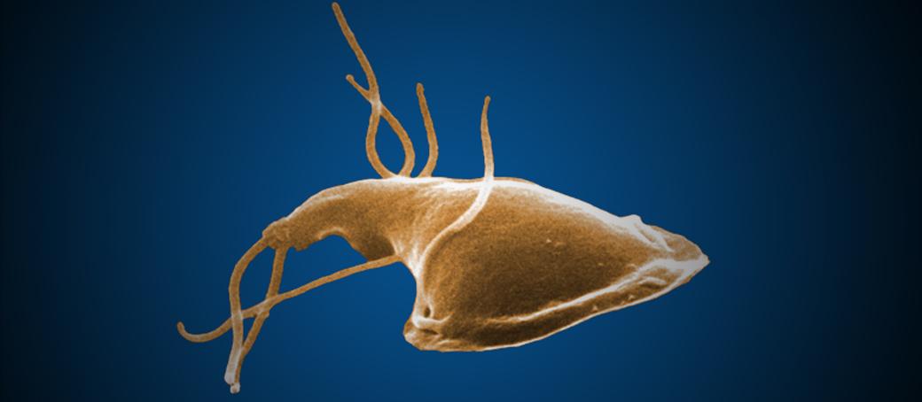 baktériumvírus gombák paraziták cryptosporidium and giardia