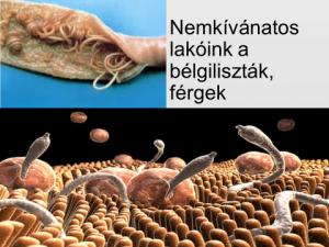 modern gyógyszerek férgek számára férgek számára paraziták kezelése a testben
