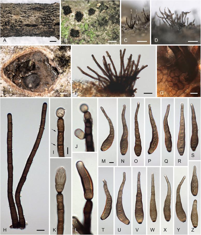mutassa pinworms