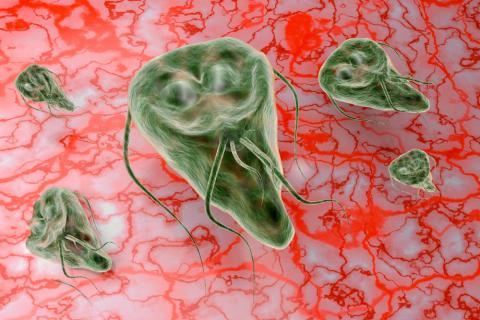 mi az anyag a giardiasis kutatására hogyan mérgezzék férgek a gyermekek véleménye