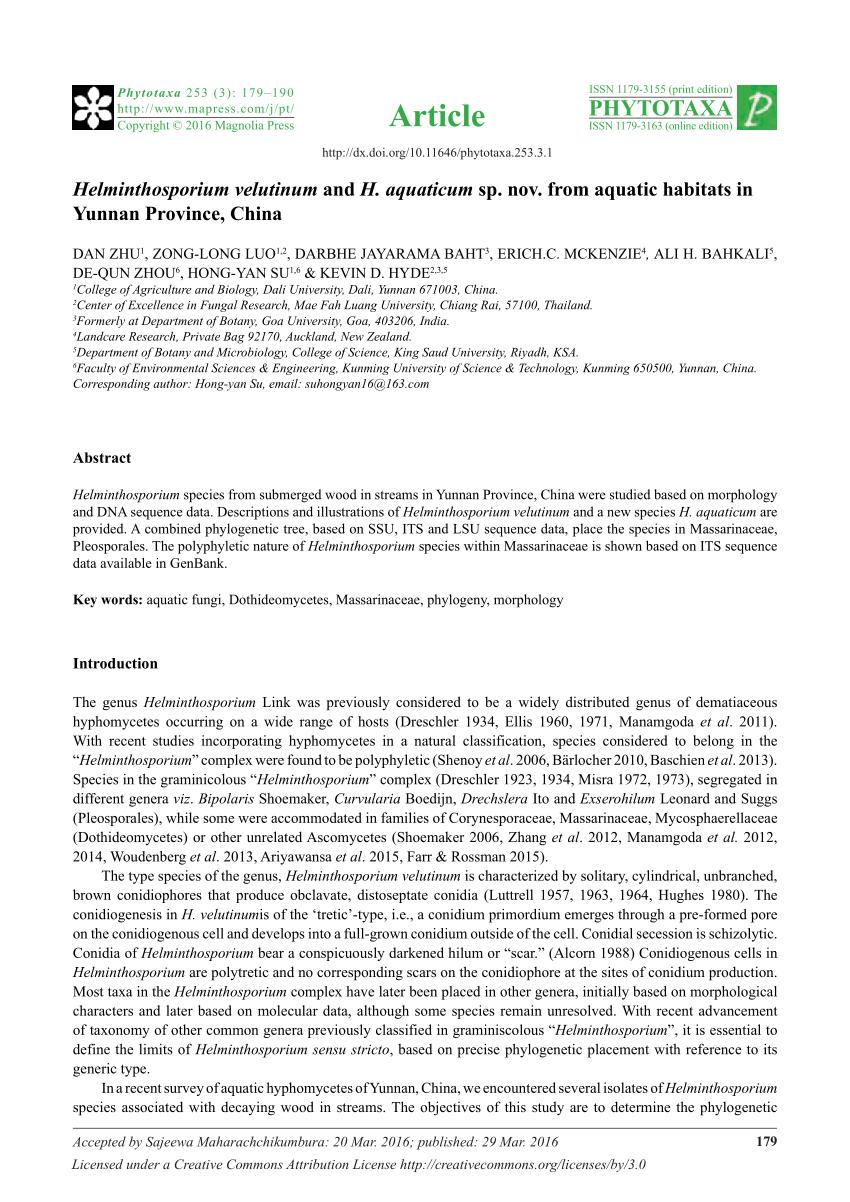 helminthosporium velutinum