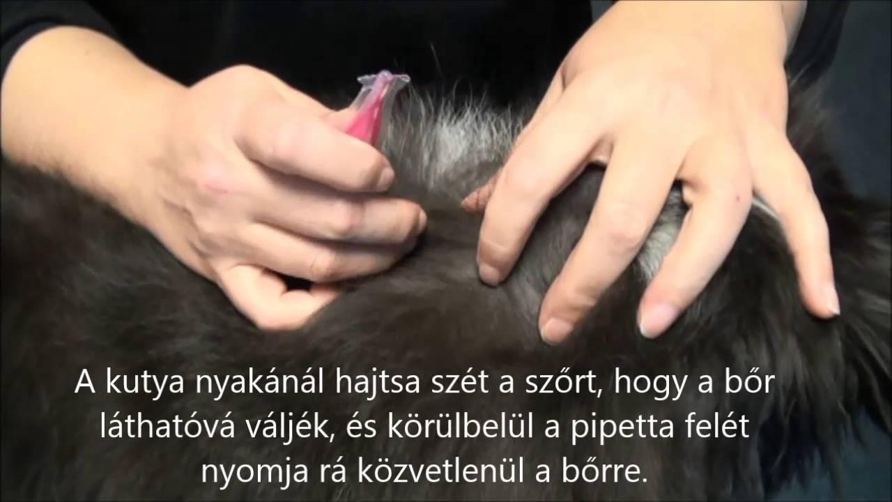 Parazitaellenes bolhacseppek. Fypryst Bolha-kullancs csepp macskának (spot-on 0,5 ml ) 1 db pipetta