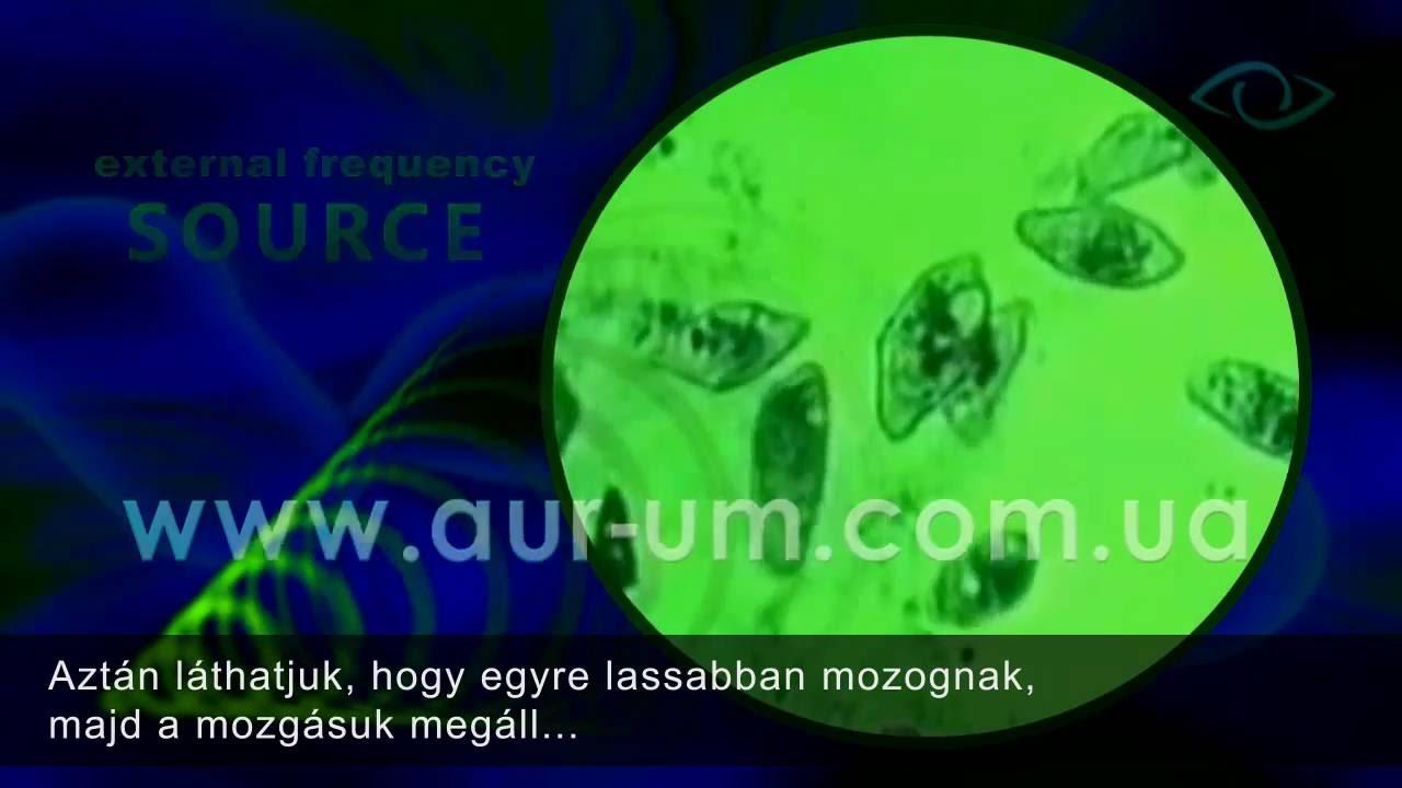 petesejtek és paraziták féreg gyógyszer az emberek véleménye
