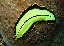 a parazitákból származó fű a gyermek testében grapefruitmag csepp bélféreg
