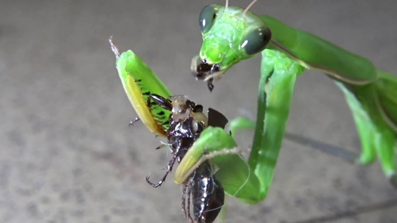 haldokló paraziták pinworm fertőzés megelőzése