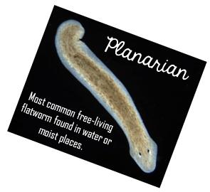 mérgezett parazita gyógyszer paraziták tünetei és kezelés népi gyógyszerekkel